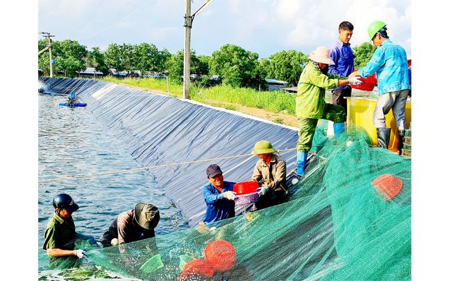 nguy cơ bùng phát dịch bệnh thủy sản